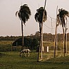 Kay Fochtmann - Brasilien - Marajo - palms - horse - travel photography