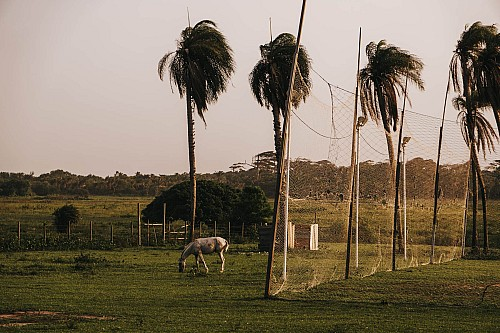 Kay Fochtmann - Brasilien - Marajo - palms - horse - travel photography