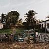 Kay Fochtmann - Brasilien - Marajo - palms - house - travel photography