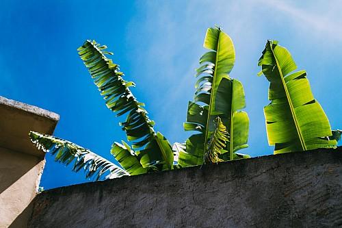 Kay Fochtmann - Brasilien - Rio de Janeiro - Palme - travel photography