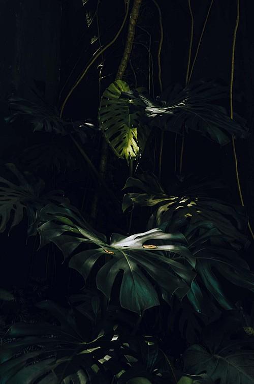 Kay Fochtmann - Brasilien - Rio de Janeiro - plants - jungle - light - travel photography