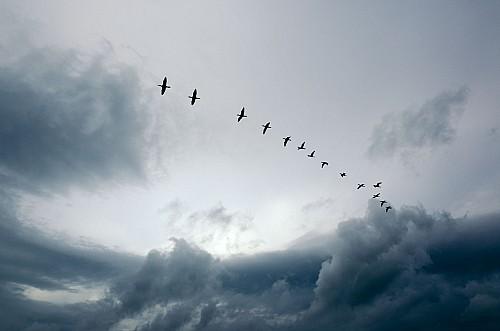 Kay Fochtmann - Brasilien - sky - wolken - himmel - birds - vogelzug - Travel photography