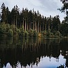 Kay Fochtmann - Deutschland - Harz - Lake - See - trees - forest - travel photography