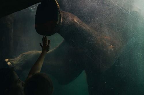Kay Fochtmann - Deutschland - Leipzig - Elefant - zoo - lifestyle photography