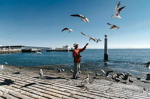 Kay Fochtmann - Portugal - Lissabon - man - seagulls - travel photography