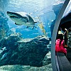 Kay Fochtmann - Thailand - Bangkok - Ocean - Sea - Aquarium - travel photography
