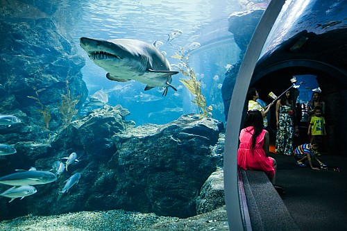 Kay Fochtmann - Thailand - Bangkok - Ocean - Sea - Aquarium - travel photography