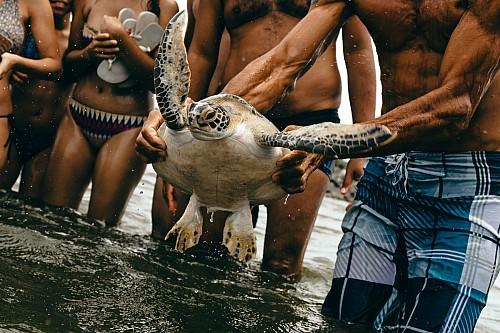 Kay Fochtmann - Brasilien - Rio de Janeiro - beach - turtle - Travel-photography